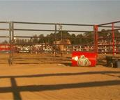 Bull Riding Twitter Picture from Kapuskasing