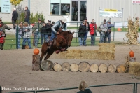 Wild Log Jump at Ontario Xtreme Cowboy Extreme Cowboy Race in Norwood, Ontario